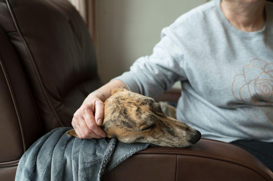 John Szepietowski advises on Winter Dog Care